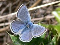 Butterflies & Bulldozers